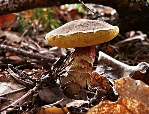 Charla sobre hongos medicinales